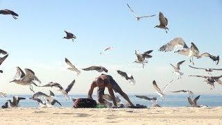 Смотреть онлайн Лежишь загораешь, а тебя начинают окружать птицы