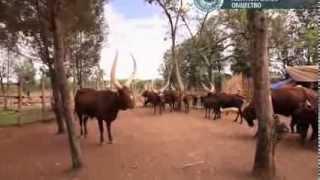 Смотреть онлайн Путешествие в Руанду: Кигали и окрестности.