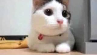 Смотреть онлайн Коты-летуны