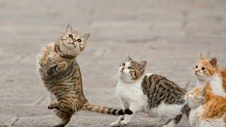 Смотреть онлайн Кошачье удивление