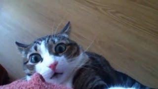 Смотреть онлайн Лучшая подборка коты