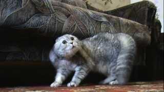 Говорящий кот Тихон - Видео онлайн