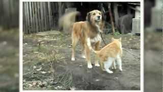 Смотреть онлайн Удивительная любовь кошки к собаки