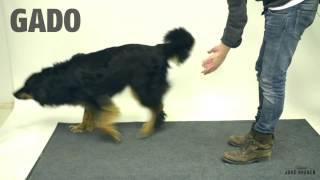 Смотреть онлайн Показываем собаке фокус с исчезающей едой