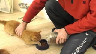 Смотреть онлайн Голодный кот готов сожрать всех
