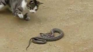 Смотреть онлайн Война со змеями