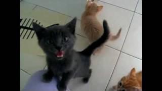 Смотреть онлайн Покормите… ну покормите кота