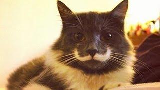 Смотреть онлайн Сборник прикольных роликов про кошек