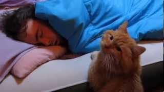 Смотреть онлайн Терпеливый кот