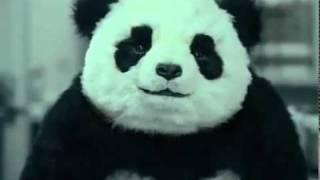 """Смотреть онлайн Панда  заставит полюбить сыр """"Панда"""""""