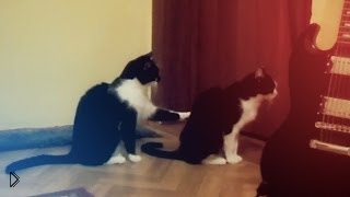 Смотреть онлайн Кошка просит прощения