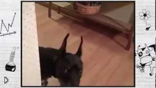 Смотреть онлайн Прикол с озвучкой мыслей собаки