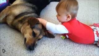 Смотреть онлайн Собака для ребенка – друг и игрушка