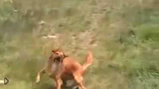 Смотреть онлайн Заводной танец собаки