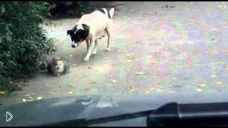 Смотреть онлайн Хитрая собака против кошки