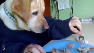 Смотреть онлайн Прикольная собака ест руками