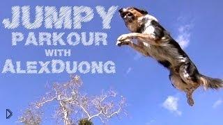 Смотреть онлайн Какая собака, такой и хозяин: лучшие паркуристы