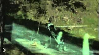 Странных существ зафиксировала камера - Видео онлайн