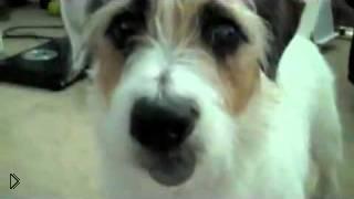 Смотреть онлайн Прикол: собака – мастер на все лапы