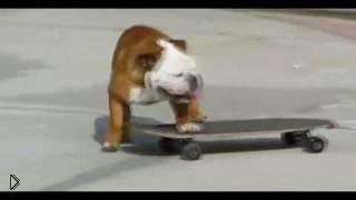 Смотреть онлайн Собака едет на скейтборде по улице