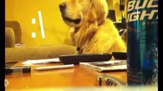 Смотреть онлайн Любимая музыка рыжего пса