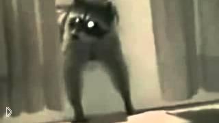 Смотреть онлайн Нарезка роликов со смешными енотами