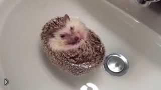 Смотреть онлайн Ёжик который любит принять ванну