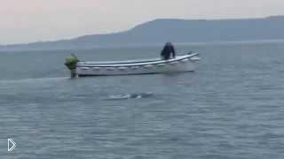 Смотреть онлайн Морское чудище напугало ирландских рыболовов