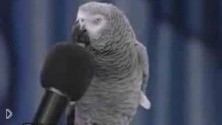 Смотреть онлайн Умный попугай Жако имитирует звуки