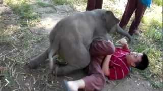Смотреть онлайн Настоящая дружба слоненка и смотрителя