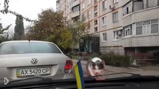 Смотреть онлайн Прикол с котом: берегись автомобиля