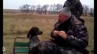 Собака умеет приносить бутылку водки - Видео онлайн