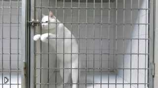 Смотреть онлайн Самый умный и хитрый кот