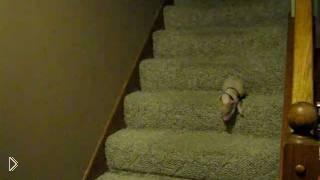 Смотреть онлайн Поросенок не может решится спуститься с лестницы