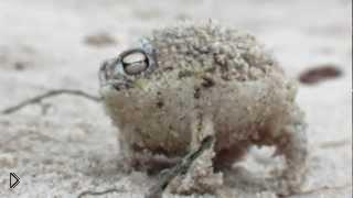 Смотреть онлайн Самая прикольная лягушка пищит