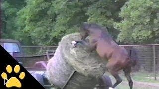Нарезка приколов с лошадьми - Видео онлайн