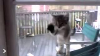 Смотреть онлайн Подборка очень смешных роликов про кошек