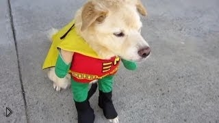 Смотреть онлайн Питомцы в крутой одежде для собак