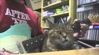 Смотреть онлайн Супер терпеливый кот против гитары