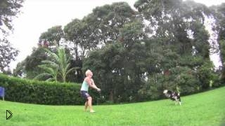 Смотреть онлайн Умная собака играет в волейбол