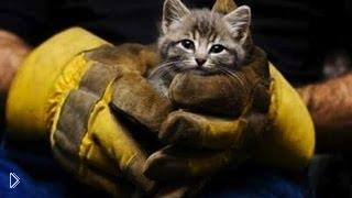 Смотреть онлайн Истории спасения бездомных животных от гибели