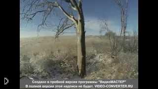 Зимняя охота на волка - Видео онлайн