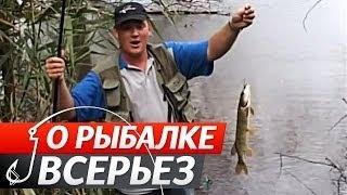 Смотреть онлайн Как рыбаки ловят карпа на поплавочную удочку