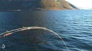 Смотреть онлайн Трофейная русская рыбалка в открытом море