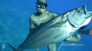 Смотреть онлайн Съёмка подводной камерой рыбалки на морских хищников