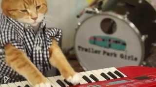 Смотреть онлайн Кот музыкант играет на синтезаторе