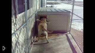 Смотреть онлайн Самые смешные собаки породы лабрадор