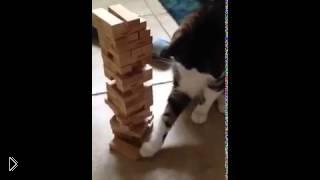 Смотреть онлайн Кот играет в Башню Дженга с хозяином