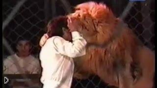 Смотреть онлайн Нападение льва на дрессировщика в цирке 22 сентября 2012