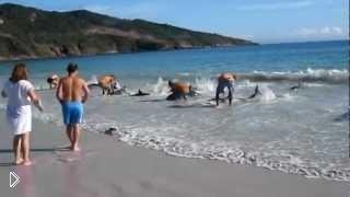 Смотреть онлайн Люди спасли дельфинов в Бразилии